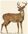 Расчёт и проектирование оленьих хозяйств Логотип